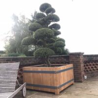 large wadham planter with tree