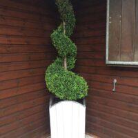 white pembroke planter width spiral shrub